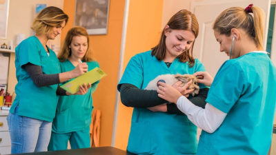 Eliminate conflict in your veterinary practice